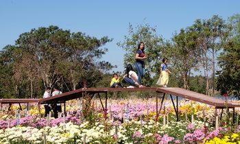 หมู่บ้านห้วยสำราญ ท้องทุ่งแห่งดอกไม้ของจังหวัดอุดรธานี