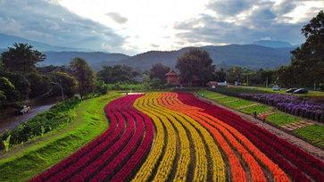 Sixflowers Garden อาณาจักรทุ่งดอกซิโลเซียสีรุ้งกลางหุบเขา แห่งเมืองเชียงใหม่