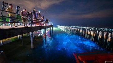 แพลงก์ตอนเรืองแสงแห่งสมุทรสาคร! ปรากฏการณ์สุดมหัศจรรย์ที่หาชมได้ใกล้กรุงเทพฯ