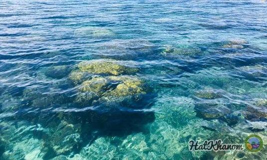 เปิดภาพแนวปะการังใต้ทะเลหาดขนอม-หมู่เกาะทะเลใต้  ในวันที่ไร้นักท่องเที่ยว