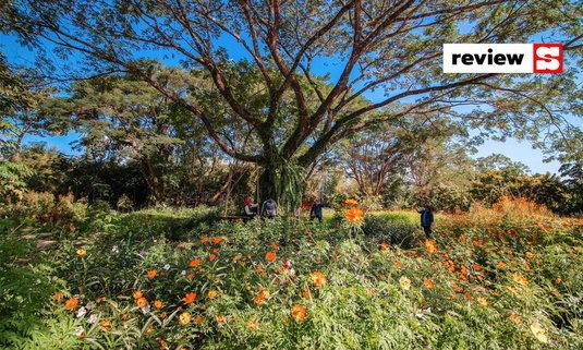 วังยาวดาวกระจาย สวนดอกไม้แห่งนครนายก มุมถ่ายรูปสวยที่ไม่ควรพลาด