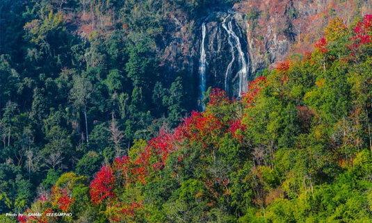 ปรากฏการณ์ป่าเปลี่ยนสี ที่จุดชมวิวกิ่วงวงช้าง @อช.คลองลาน