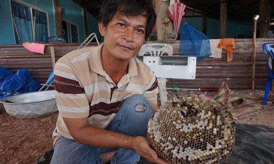 สุดทึ่ง! หมู่บ้านอาชีพเสี่ยงตายเลี้ยงต่อหัวเสือขายทำเงินสู้โควิด