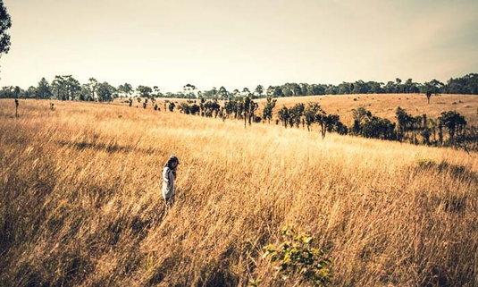 """""""ทุ่งแสลงหลวง"""" สายหมอก ป่าสน และทุ่งหญ้าสีทอง"""