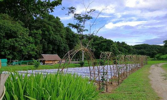 เที่ยวเชียงราย แวะไร่อิงจันทร์ สัมผัสสวนเกษตรชิมผักปลอดสารพิษ