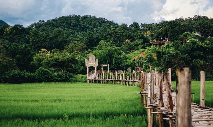 ความงดงามแห่งหน้าฝน สะพานซูตองเป้กลางทุ่งนาเขียวขจี