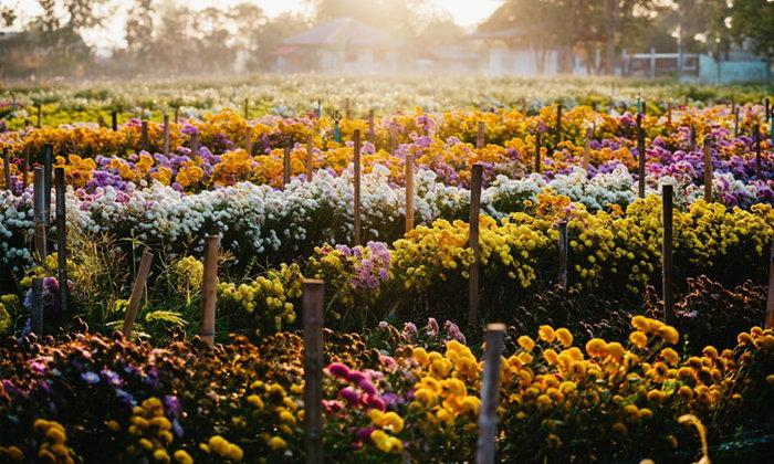 ห้วยสำราญ หมู่บ้านแห่งดอกไม้