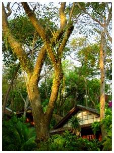 เจี๊ยบ บังกาโล (เกาะเสม็ด)