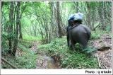 ช้างขนสัมภาระเดินล่วงหน้าไปก่อน