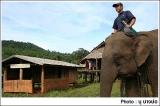 ช้างเลี้ยงไว้ใช้งานในหมู่บ้านทิโพจิ