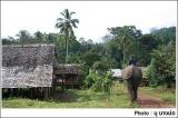 ช้างในหมู่บ้านทิโพจิ