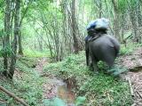 ช้างแบกสัมภาระเดินนำพวกเราไปก่อน