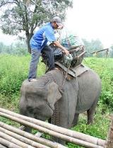 ช้างกับสัมภาระ