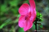 ดอกไม้สีสดสวยงามในป่าดงนาทาม