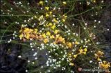 ดอกไม้ดินมีให้เห็นอยู่ดารดาษมากมาย