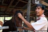 อาจารย์ชูชาติ  วารปรีดี ครูนอกคอก แห่งรายการคนค้นคน สาธิตวิธีการเลี้ยงม้าพันธุ์พื้นบ้าน