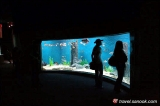 ตู้ปลาขนาดใหญ่ เชียงใหม่ ซู อควาเรียม