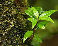 โครงการ Forest: The Circle of Life รักษ์ต้นน้ำด้วยผืนป่าปี 2