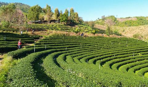 10 อันดับที่เที่ยวสีเขียว น่าไปพักผ่อนช่วงปีใหม่ เกี่ยวกับ 10 green tourism