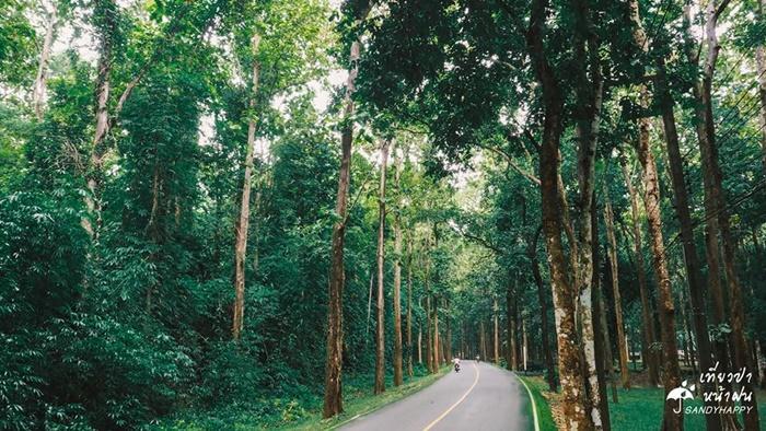 20708399_814882862000235_7706 เที่ยวป่า หน้าฝน ที่ กาญจนบุรี