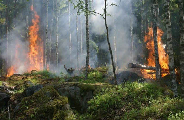 forest-fire-432870_960_720-64