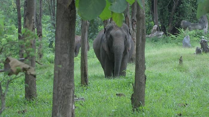 elephanthouse7