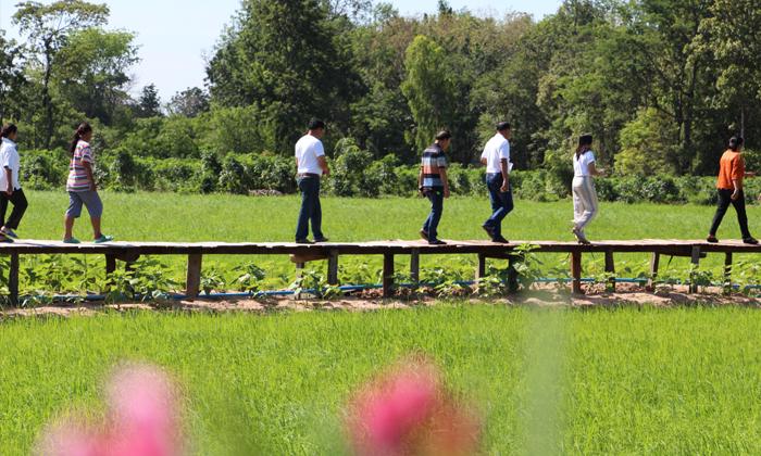 สะพานไม้ฟาร์มสุข แหล่งท่องเที่ยวใหม่ ใจกลางทุ่งนาโคราช
