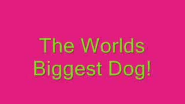 หมาใหญ่ เจอ หมาเล็ก