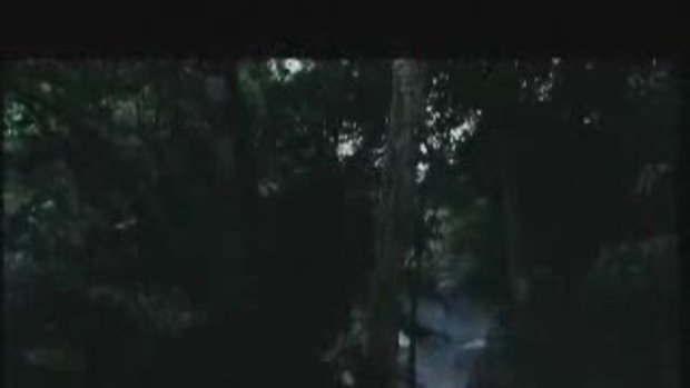 Deep in the Jungle - ปฏิหาริย์รักต่างพันธุ์