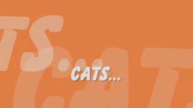 น้องแมวจอมซน