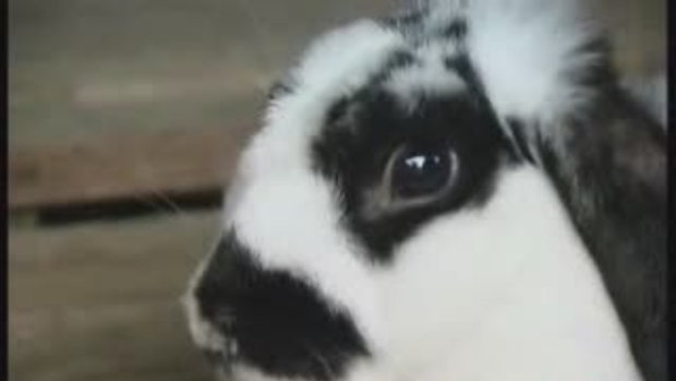 กระต่าย6