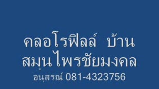 Bansamonprai.Net,Cholophyll,คลอโรฟิลล์,แองเจิ้ล,คล