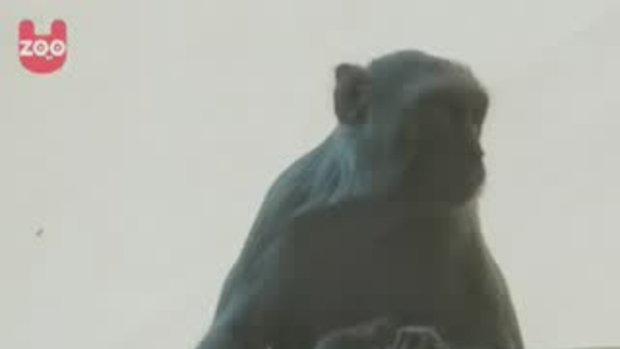 หมาเลี้ยงลูกลิงน่ารัก