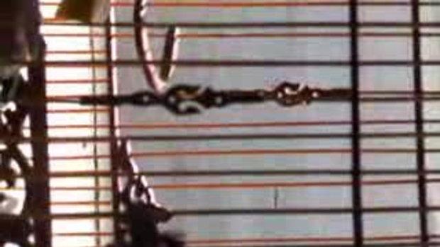นกกรงหัวจุก Tatin-2