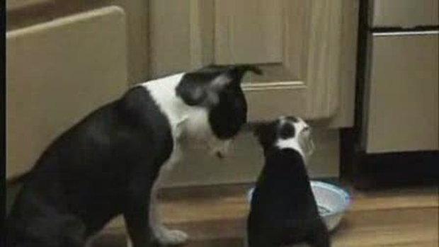 ฮา ฮา หมาน่ารัก ยกขาหลังกินน้ำ