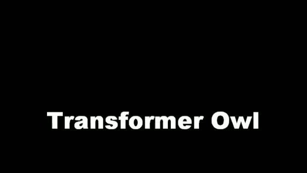 นกฮูก ก็แปลงร่างได้ Transformer Owl