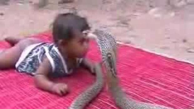 งูเห่ากัดเด็ก!