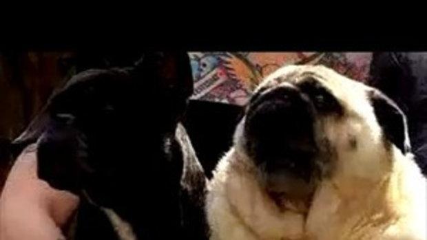 หมาเรียก แบทแมน!!