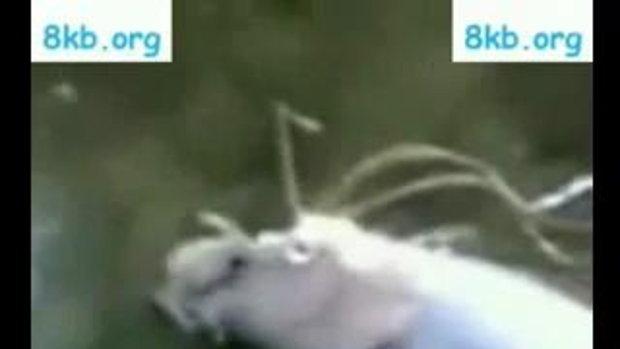 โฉมหน้ามังกรที่ตายแล้ว ที่พบในจีน
