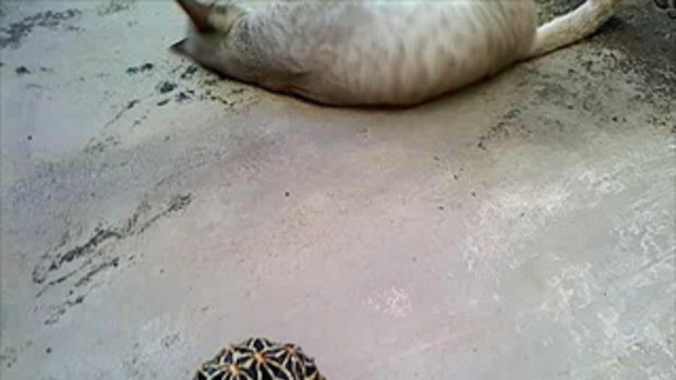 แมวกับเต่าภาค 2