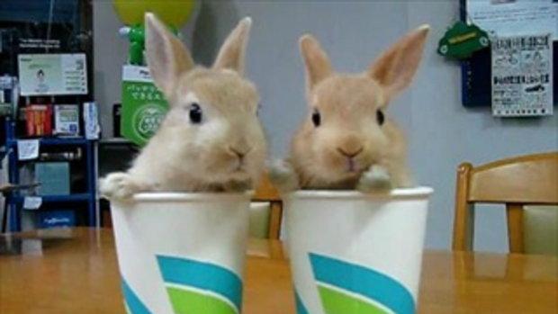 กระต่ายน่ารัก ในแก้วน้ำ!!