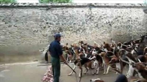 ให้อาหารสุนัขทีเดียว 100 ตัว!!!