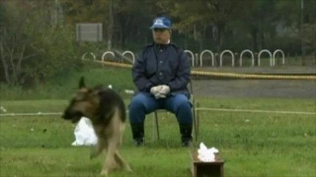 เจ้าโมโม่ สุนัขตำรวจ พันธุ์ชิวาว่า ตัวแรกของโลก