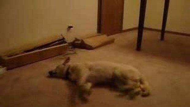 ฮา เคยเห็นหมาละเมอเเบบนี้เปล่า?