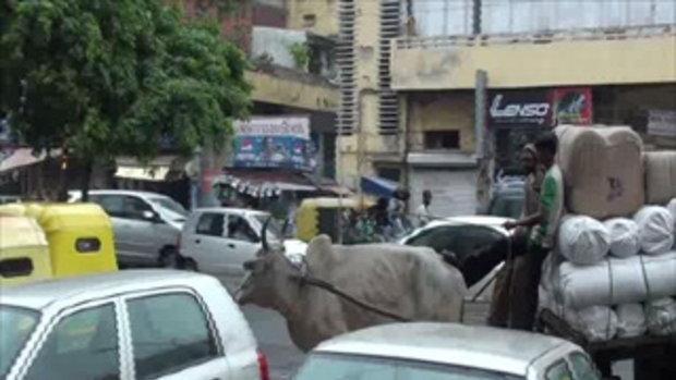 เจโอ๋เวสป้าผจญภัย-โอ๊ววัวกลางถนน