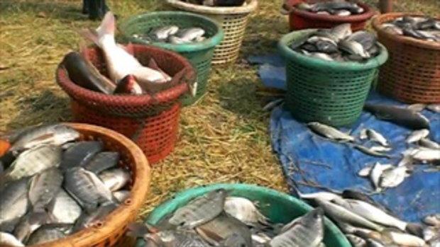 9ลุงสันติบ่อปลาธรรมชาติ
