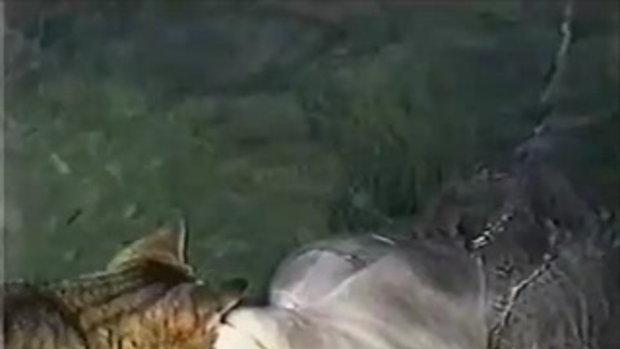 น้องเหมียว เล่นกับปลาโลมา