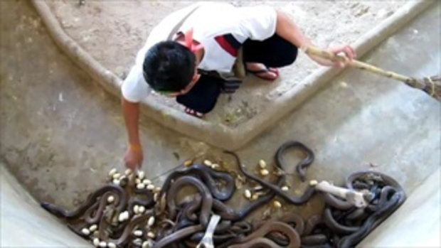 ล้างกรงงูเห่า ไม่กลัวเอาซะเลย