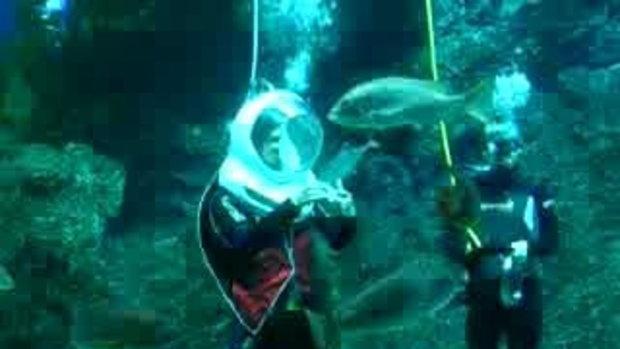 เล่นมายากลใต้น้ำในสยามโอเชียนเวิล์ด
