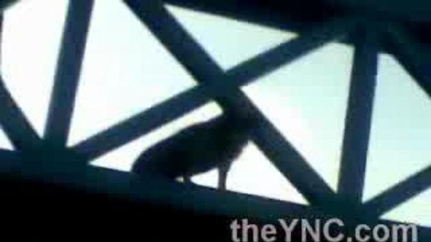หมาโดดสะพานลอย
